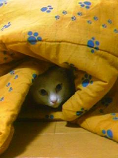 猫コタツ。.jpg