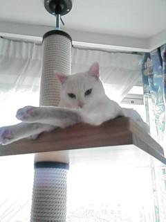 image/cafe-yuki-2006-03-09T01:52:16-1.data