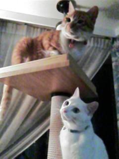 image/cafe-yuki-2006-05-14T20:33:18-1.jpg